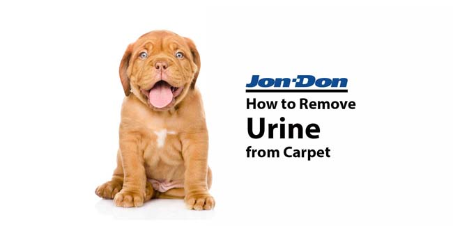 Urine Removal from Carpet