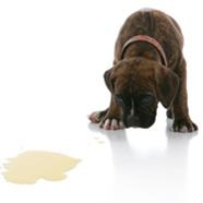 Urine Odor Removal